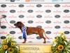 824-dogshow-echt-2013-20130706